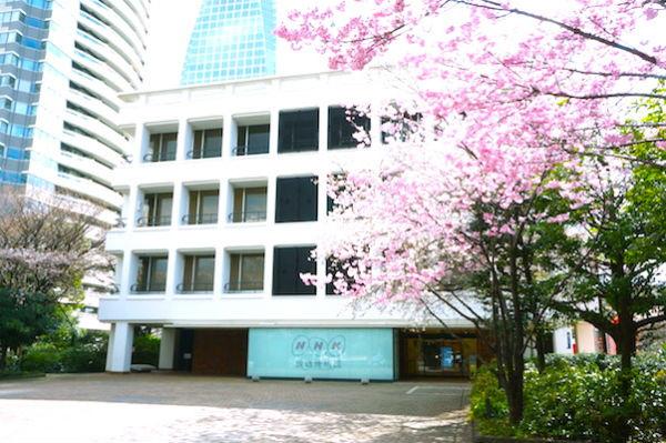 NHK陽光桜