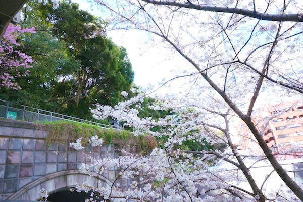 階段途中からの桜