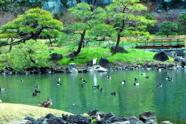 水鳥と白鷺