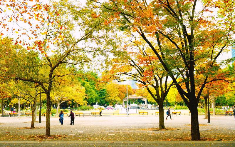 にれの木広場
